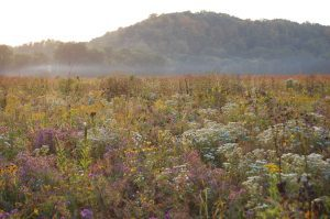 Photo of prairie grass and flowers with limestone bluffs in the background.