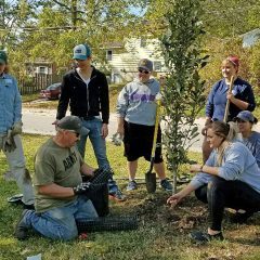 Free Tree Workshops