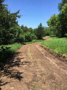 Carlson Park trail
